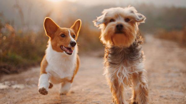 Dwa wesołe psiaki